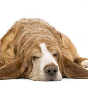 dog-groomer-reading-basset