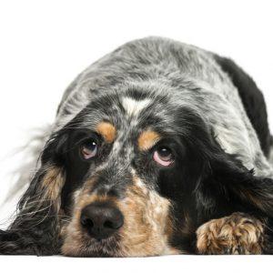 dog-groomer-reading-black