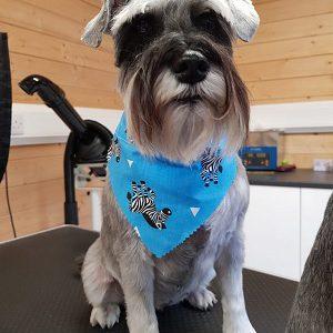dog-grooming-tilehurst-reading-berkshire